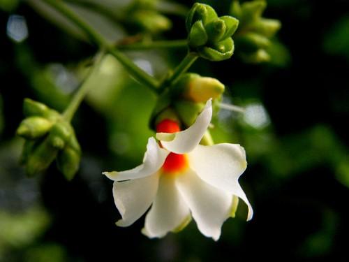 Free Wallpaper Fall Season Parijatham Parijatham Flower In My Mom S Garden