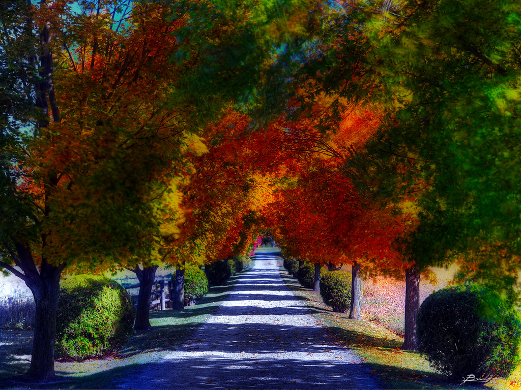Free Fall Season Wallpapers Nature S Painting An Autumn That Was Better Than The