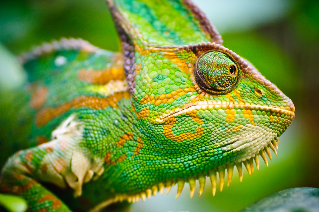 Bing 3d Wallpapers Cameleon Wilhelma Zoological And Botanical Gardens