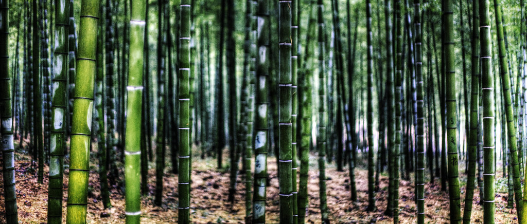Scientific Wallpaper Hd Bamboo Anji Produces 12 Million Commercial Bamboo Poles