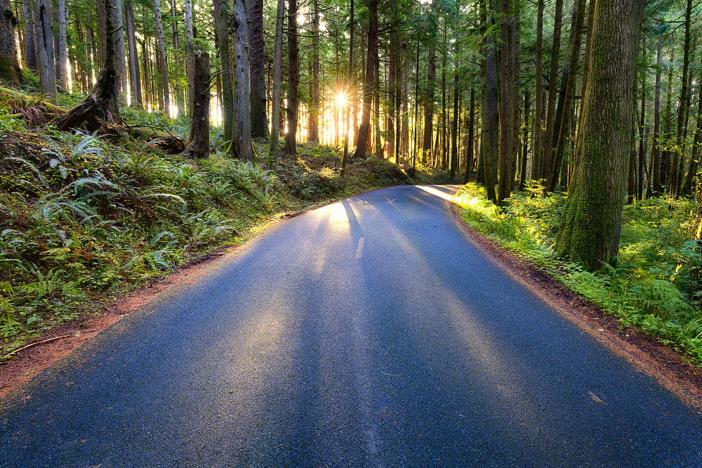 Morning 3d Wallpaper Forest Road In Oregon By Michael Matti Having Just Shot