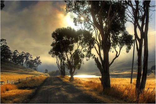 3d Wallpaper Cowboys Nala On A Misty Morning Just Love Those Misty Mornings