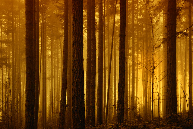 Sports Wallpapers Hd Foggy Forest Sunrise Flickr Photo Sharing