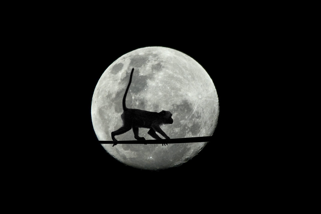 3d World Map Wallpaper For Pc Monkey In The Moon Composite Image Of A Long Tailed