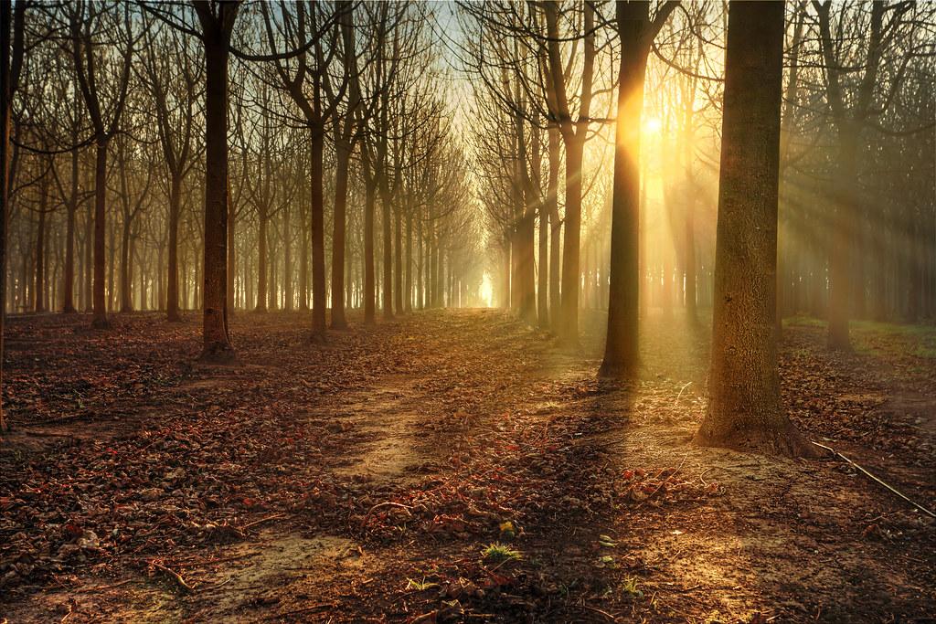 Digital Blasphemy 3d Wallpaper Free Sun Rays Through Backlit Silhouette Woodland Trees Light U