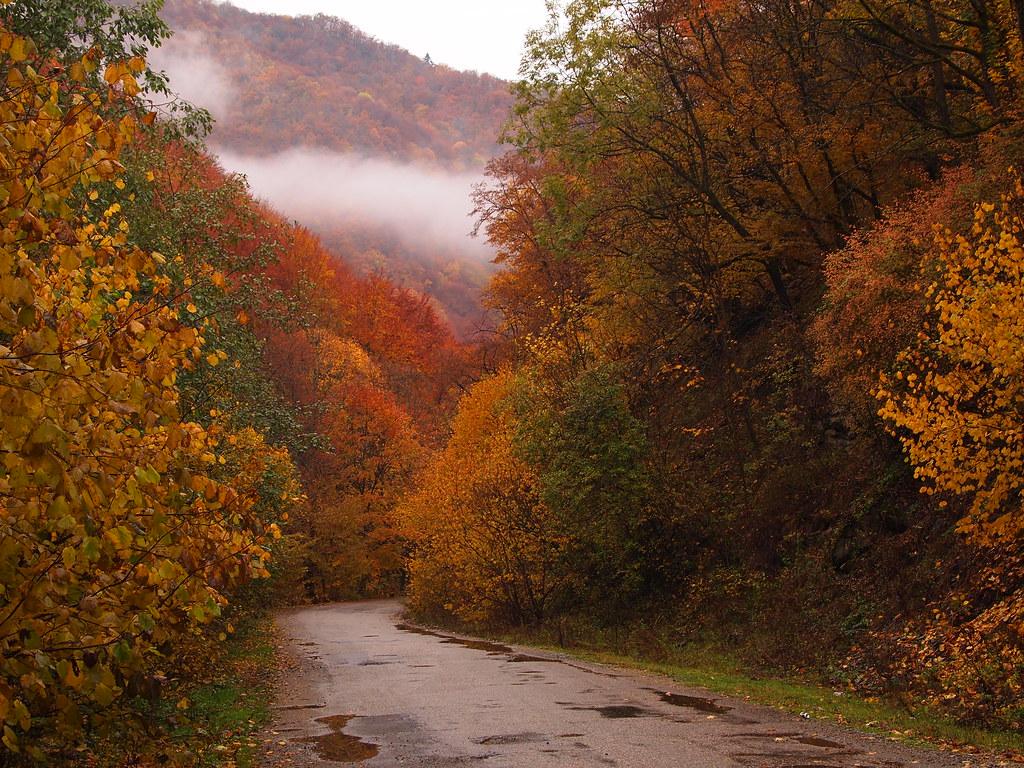 Fall Wallpaper Screensavers After Autumn Rain Olympus Digital Camera Ex Cogitator