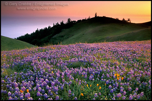 3d Colour Wallpaper Free Download Marin Flowers Amp Hills At Sunset Field Of Purple