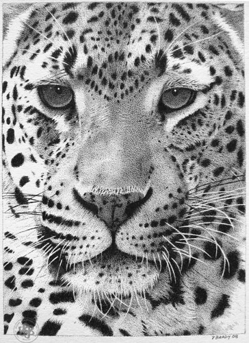 Black Leopard Hd Wallpaper Leopard 02 Pointillism Pen And Ink Paul Brady Flickr