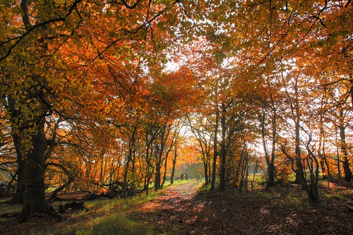 3d Tree Live Wallpaper Wytham Woods In Autumn Wytham Woods A Ca 400 Hectare