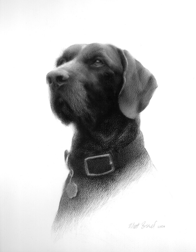 Large Of Realistic Dog Drawing
