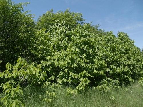 Medium Of Oikos Tree Crops