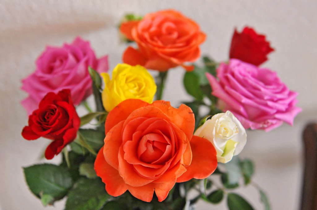 3d Colourful Wallpaper Multicolor Roses I Took A Picture Of The Roses At My