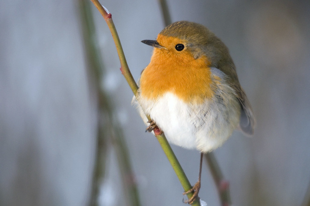 Background Cute Wallpaper When It S Cold The Robins Find You James Offer Flickr