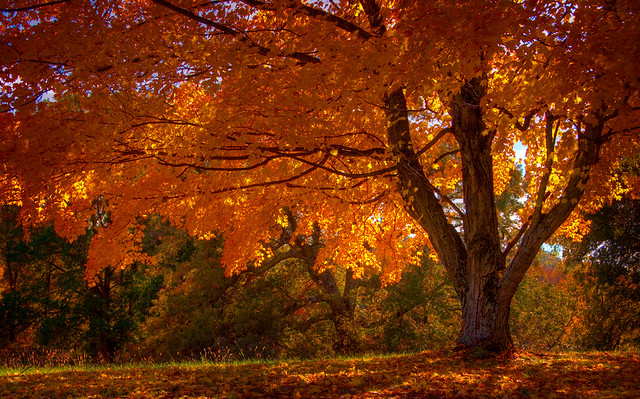 Free 3d Fall Wallpaper Autumn Trees Fall Trees Phphoto2010 Flickr