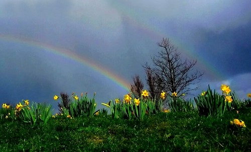 New 3d Wallpapers Free Download For Mobile Spring Rainbow Brian Mckay Flickr