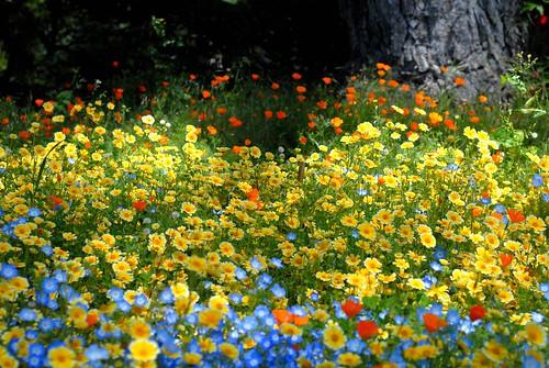 Cartoon Wallpapers Hd 3d Cartoon Field Of Flowers It Looks Fake I Felt As Though