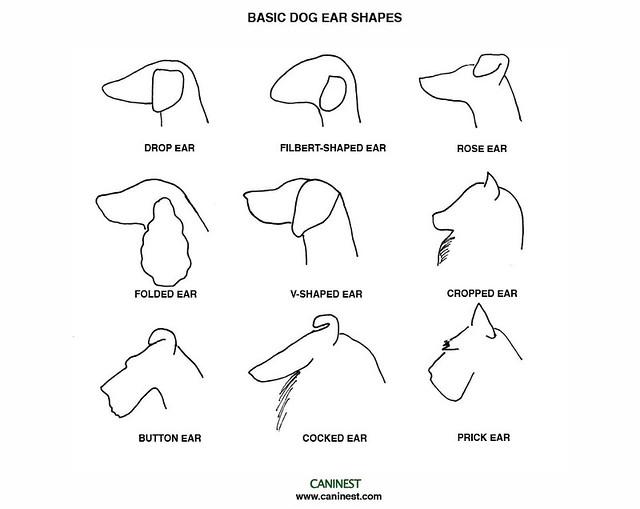 3d dog diagram