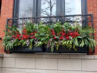 Winter Windowboxes | Topiarius - Urban Garden & Floral ...