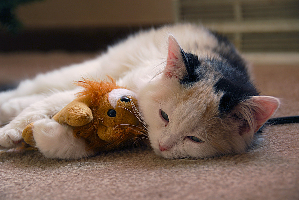 Cute Otter Wallpaper Cat Sleeping With Stuffed Animal This Image Is In The