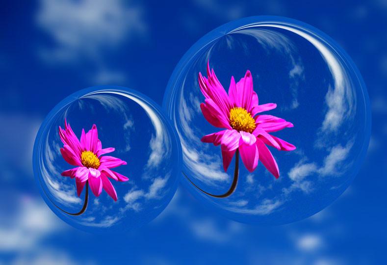 3d Bubbles Wallpaper Desktop Pretty Pink Petal Flower In Bubbles Here S The Same