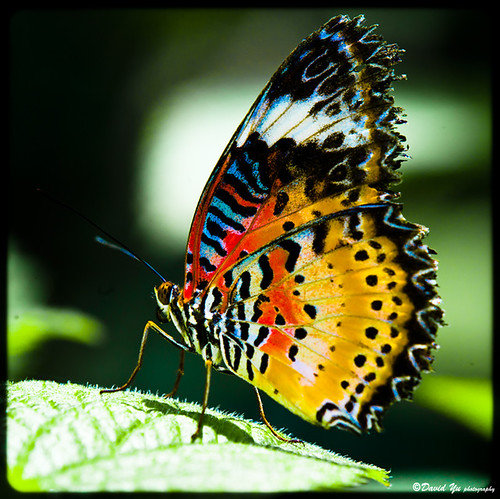 Most Beautiful 3d Wallpaper Butterfly Can You Please Do A Huge Favor To Help Me Find