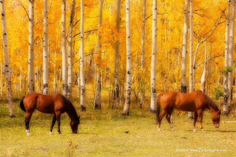 Fall Photo Wallpaper Two Horses In The Colorado Fall Foliage Beautiful