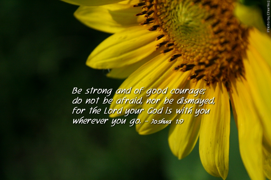 Wallpapers Of Christian Quotes Sunflower Joshua 1 9 1024x683 Charlie J Flickr