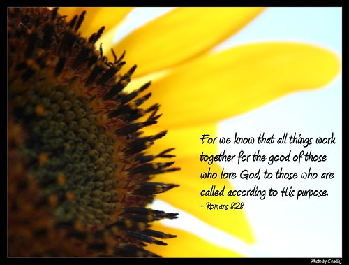 Fall Pics With Scripture Wallpaper Sunflower Romans 8 28 My Life Verse Is Romans 8 28
