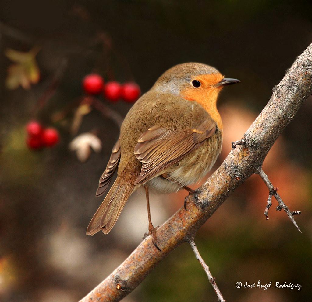 November Fall Wallpaper Aves En Oto 209 O Birds In Autumn Y 5 El Gui 209 O Del