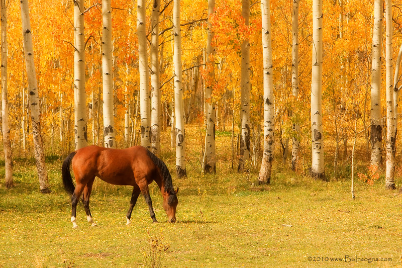 Fall Wallpaper Horses Grazing Horse In The Autumn Pasture A Beautiful Horse