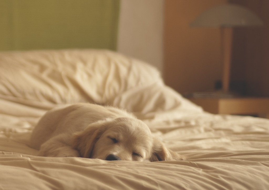 Cute Dog Memes Wallpaper Daddies Bed Is So Much More Comfy Than Mine I Ve Tried