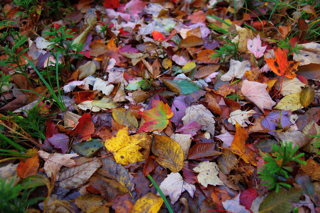 3d Fall Wallpaper Autumn Leaf Collage You Are Welcome To Use My Pictures