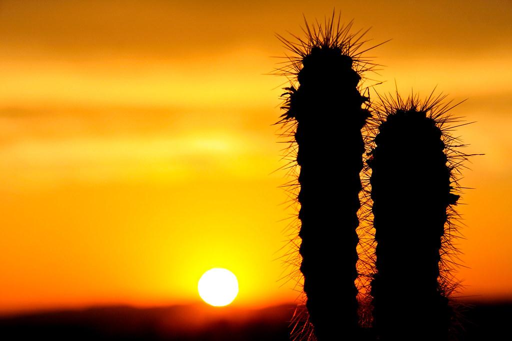 3d Orange Wallpaper Cactus Sunset Algarve File 5346 Colors The Intense