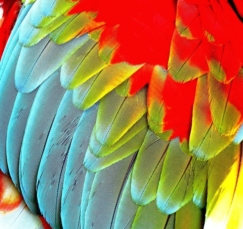New 3d Live Wallpaper Parrot Feathers Close Up Of The Vibrant And Beautiful