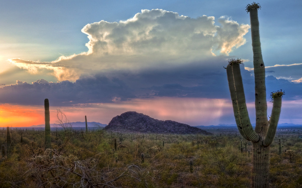 Free 3d Scenic Wallpaper Arizona Cactus At Sunset I M Just Looking Back On The