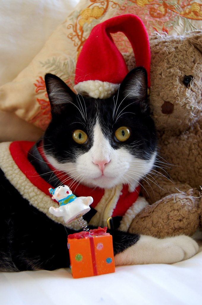 Cute Kitties Hd Wallpapers Merry Christmas From Oliver Marcie Dorethy Flickr