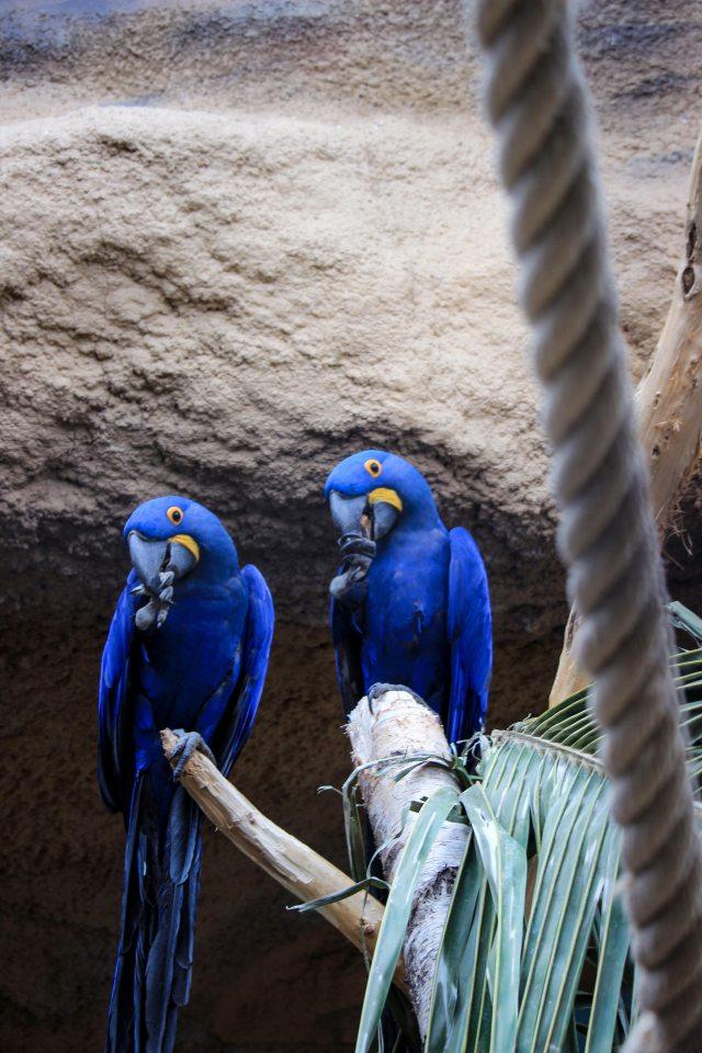 Zoo de Berlin perroquet