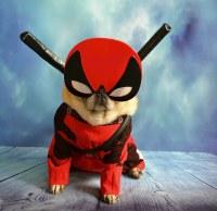 'Pugpool' Deadpool Dog Sidekick | Deadpool is one of my ...