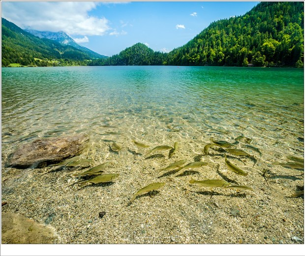De vissen in de Hintersteinersee, aan de voet van de Wilden Kaiser (Sony A9 + FE 16-35mm @ 16mm | ISO400 | f/11 | 1/250 | Haida polarisatiefilter)