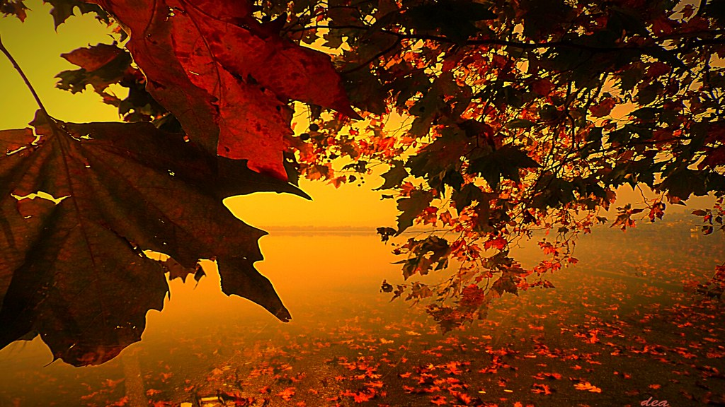 Fall Best Wallpapers I Love The Colors Of Autumn Leaves Youtu Be 1siylvmfi 8