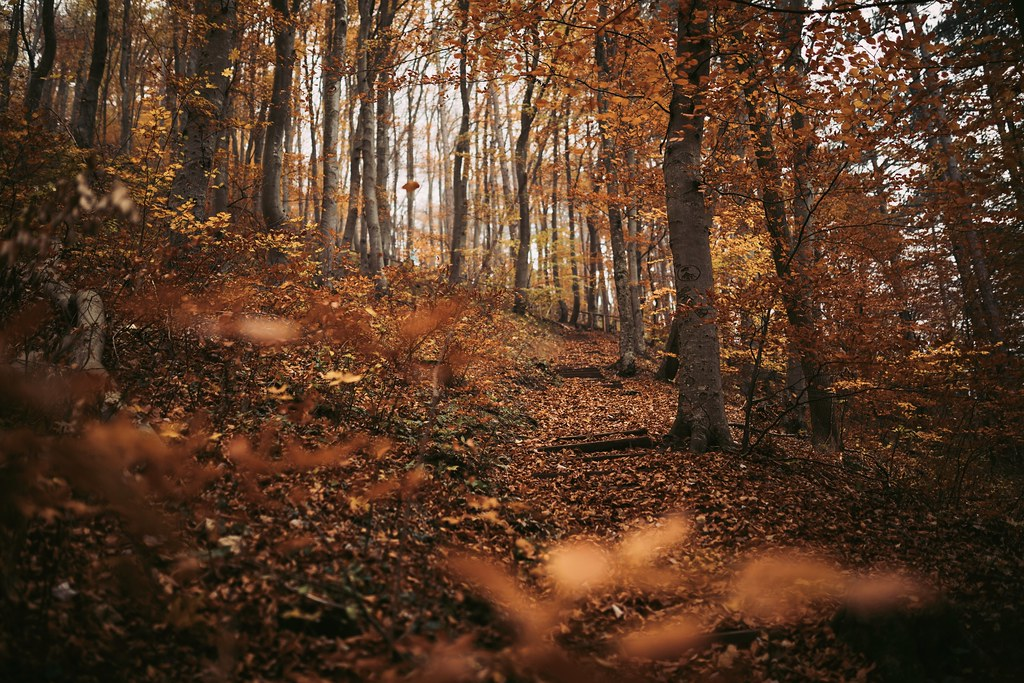 Fall Pictures For Wallpaper Free Last Autumn Vibes Instagram Tumblr 500px