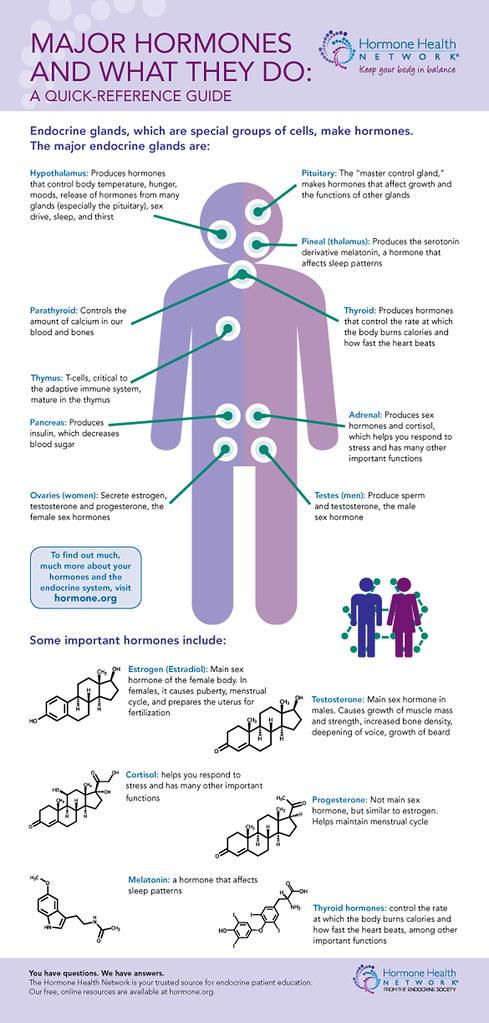 Endocrine Glands and Hormones Endocrine glands are located\u2026 Flickr