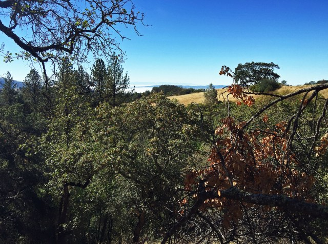View west from the Live Oak Trail, with the Santa Clara Valley in the distance.