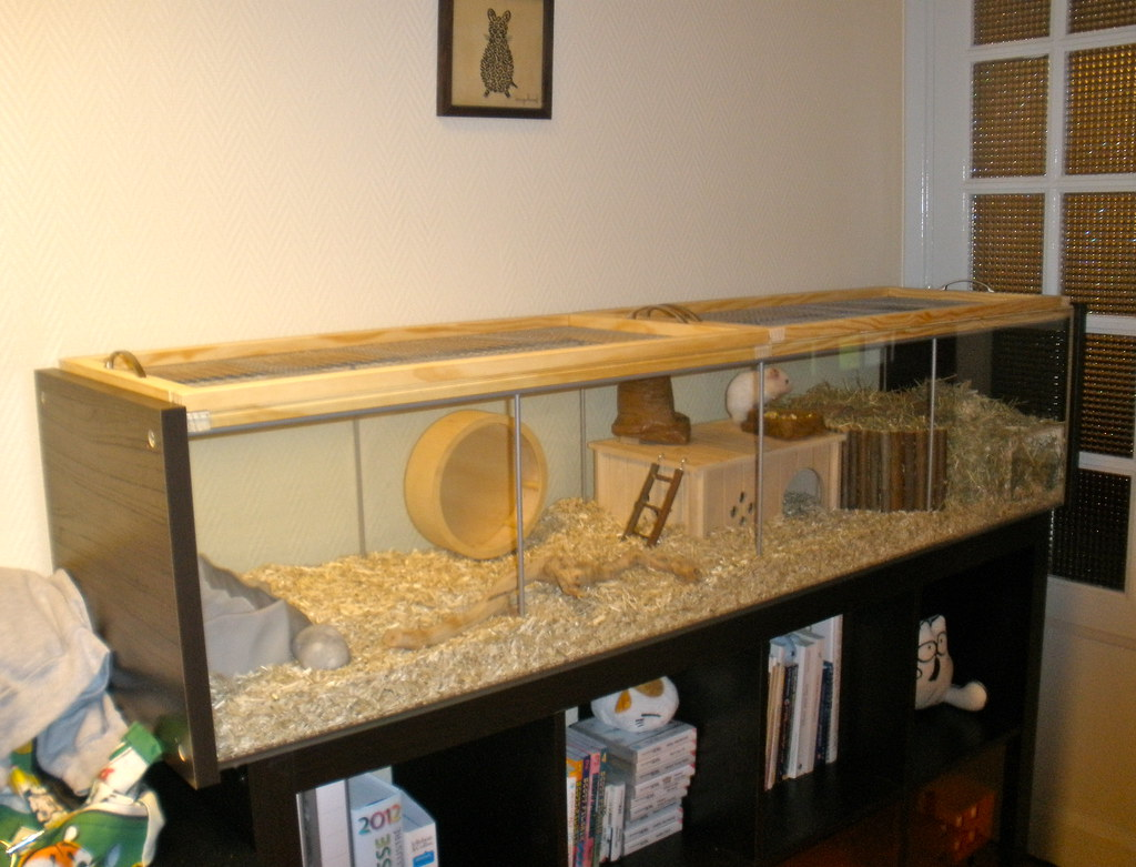 Camera Exterieur Nature Finished Hamster Habitat Project | I'll Be Adding Some