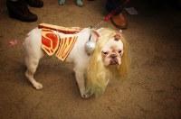 Lady Gaga Meat Dress Dog, Halloween Dog Parade, Tompkins S ...