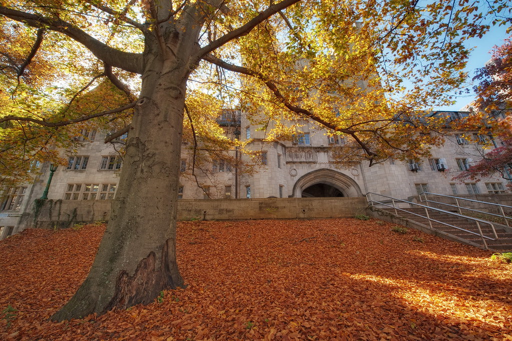 Gorgeous Fall Wallpaper The Spreading Boughs Of Autumn Indiana University Bloomi