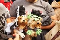 Bride of Frankenstein and Frankenstein, Halloween Dog ...