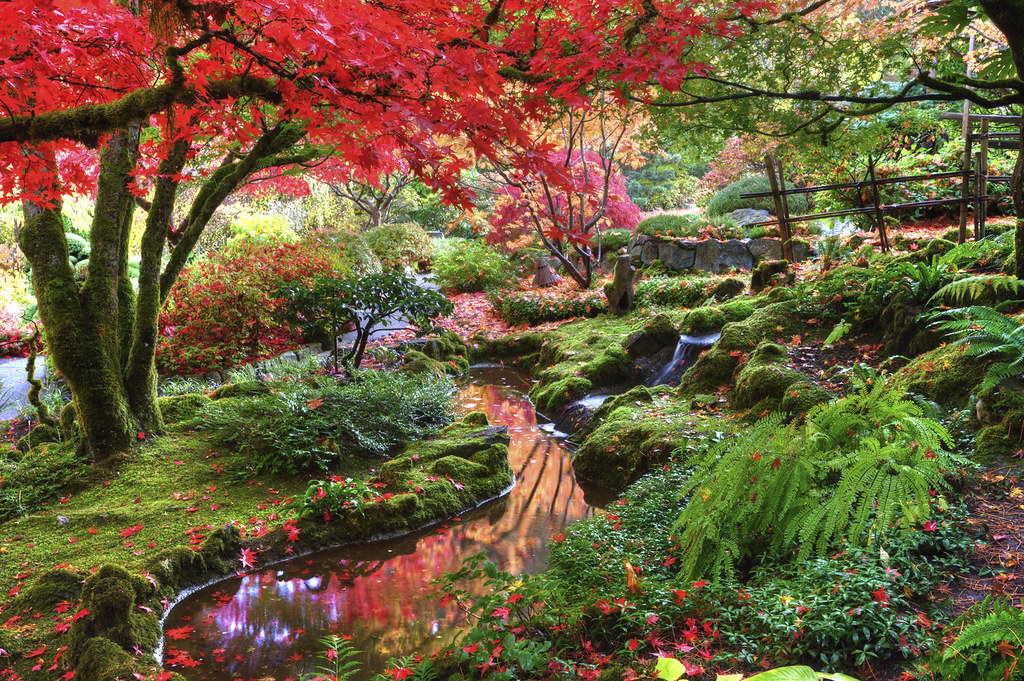 Facebook Wallpaper Fall Colors Butchart Gardens Fall Colours 0y4o1841 The Reds In