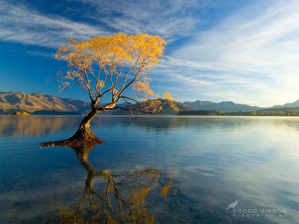 3d Wallpaper For Laptop Full Screen Lake Wanaka New Zealand Autumn Willow Thanks For