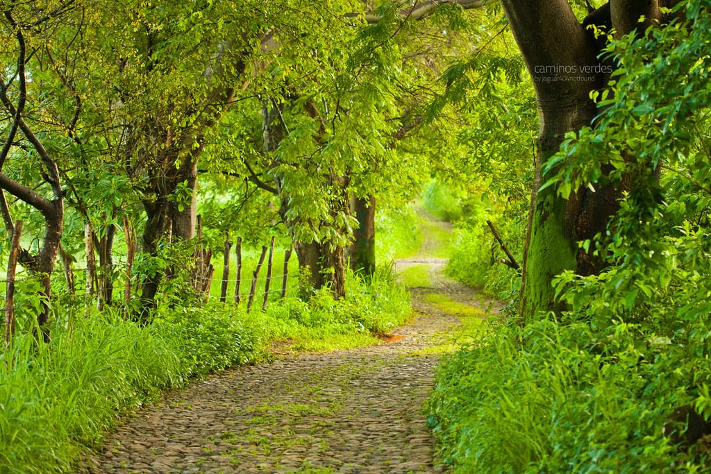 Green Forest Wallpaper Hd Caminos Verdes El Color Verde Predomina En El Paisaje